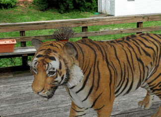 Google ricerca AR immagini animali