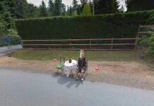 Google Maps uomo maschera da cavallo 1293 Liberty Drive, Victoria, Canada