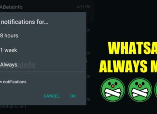 Whatsapp chat muta always per sempre